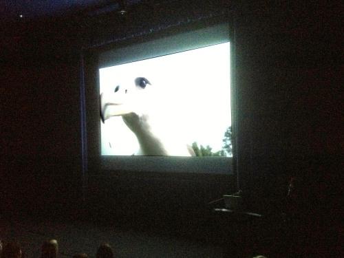 CJordan albatross slide 1